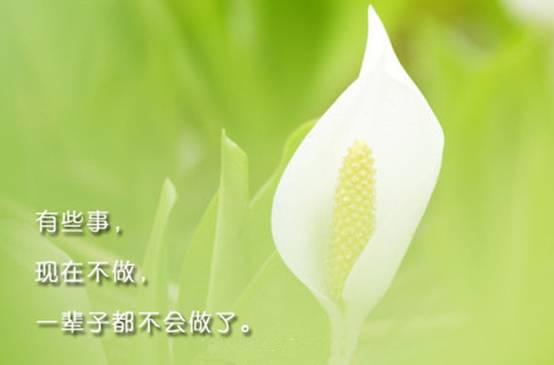 越努力,越幸运,新世嘉为你的4月呐喊加油!